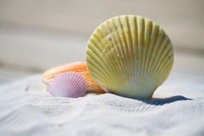 shells-792912__340